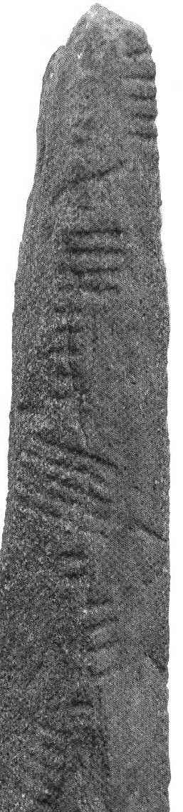 [picture of ogham inscribed pillar-stone]